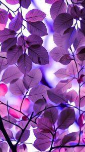 Papel de Parede para WhatsApp folhas lilas